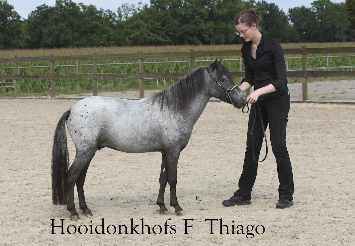 48 Hooidonkhofs F Thiago Thumb