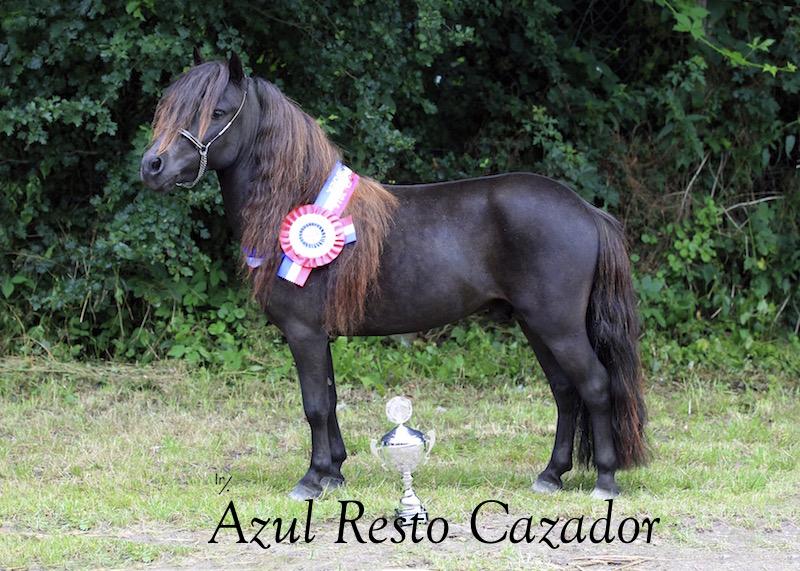 Azul Resto Cazador dagkampioen 2017 thumb