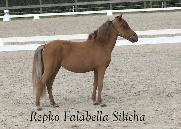 Repko Falabella Silicha thumb